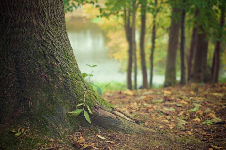 autumn-fall-forest-4700.jpg