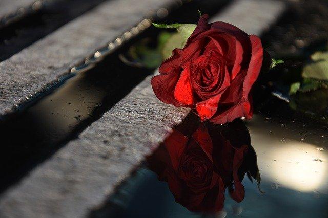 rose-3597531_640.jpg
